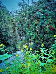 景色の花束
