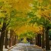 秋の散歩道!