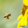 花粉団子の積載ギリギリ大丈夫か?