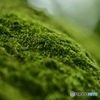 涼しげなグリーンモス