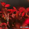 秋の赤コーデ