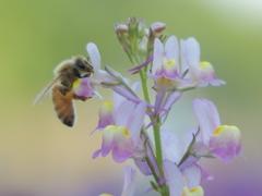 a taste of nectar