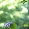 木陰 初夏の公園