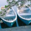 浮見堂と桜5