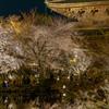 東寺ライトアップ3