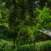 旧古河庭園・日本庭園2