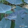 神代植物公園温室シリーズ1
