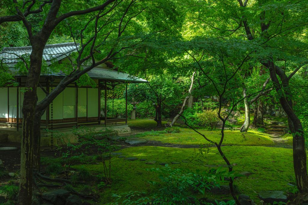 旧古河庭園・日本庭園1