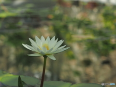 神代植物公園温室シリーズ4