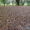 雨の昭和記念公園1