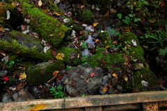御岳山 苔と濡れ落ち葉