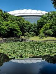 スイレンの池と隣接する東京ドーム