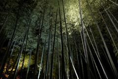 京都trip8