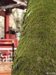 井の頭公園 苔シリーズ1