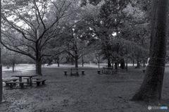 井の頭公園西園付近3