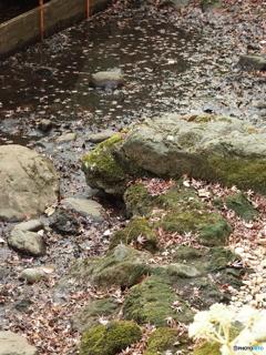 井の頭公園 苔シリーズ3