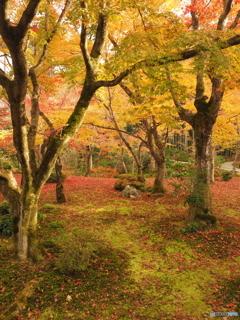 圓光寺の庭園