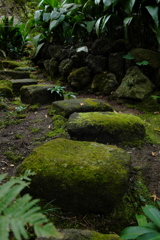 報国寺 苔まみれ石