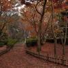 神代植物公園 落ち葉の絨毯