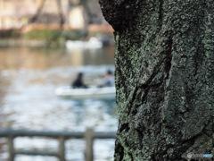 井の頭公園 苔シリーズ4