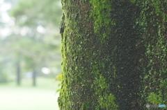 雨の昭和記念公園4