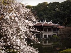 新宿御苑 桜と台湾閣