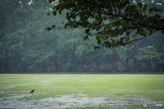 雨の井の頭公園西園付近2