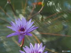 神代植物公園温室シリーズ3