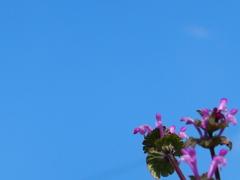 青空に花を添えて