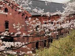 舞鶴の春 2