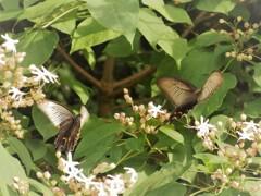 蝶を呼ぶ花