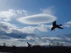 雲と鴨と 3
