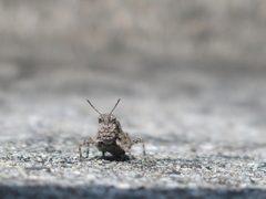 コンクリートから生まれた虫 1