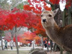 奈良公園と言えば 2