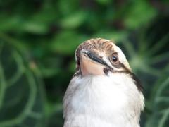 花鳥園の鳥たち 4