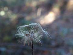 綿毛の季節 1