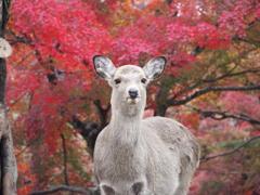奈良公園と言えば 1