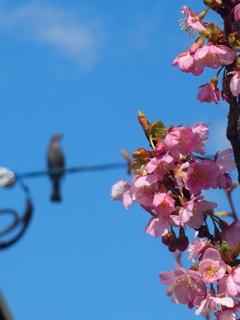 やっぱ、主役は桜でしょ♪♪