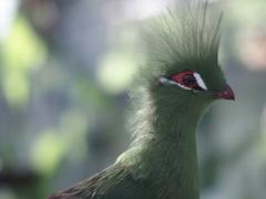 花鳥園の鳥たち 1