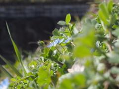 枯れ草の中に小さな春