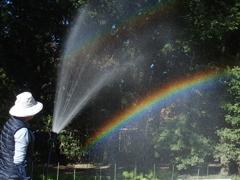 「虹ですよ~」 1