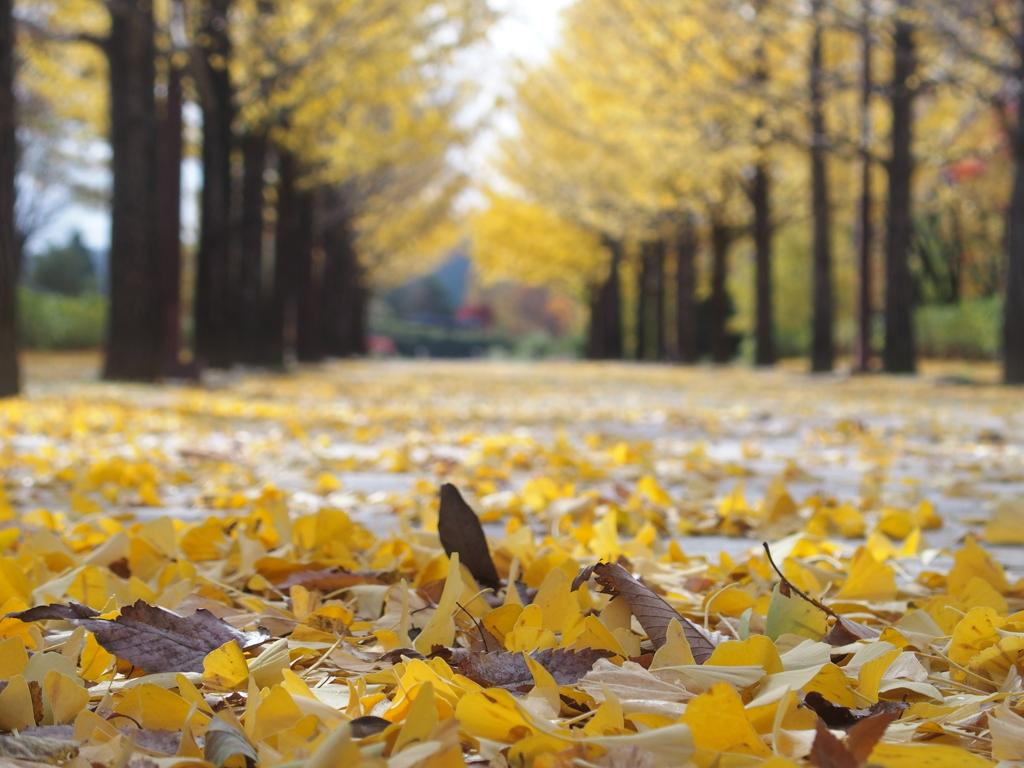 僕だけの黄色い絨毯