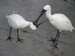 花鳥園の鳥たち 2