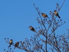 雀のなる木