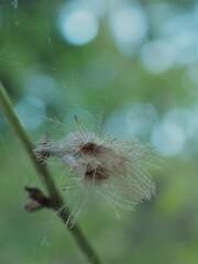 綿毛の季節 3