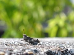 コンクリートから生まれた虫 2
