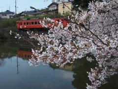 桜トンネルを行く