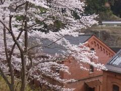 舞鶴の春 1