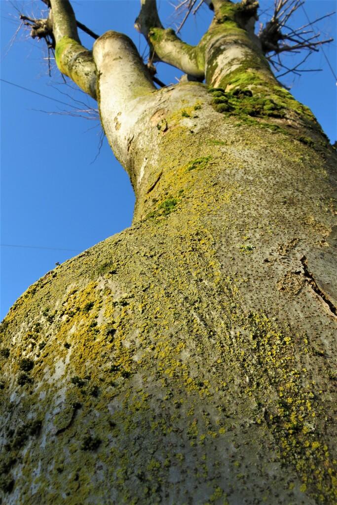 苔の生えた樹