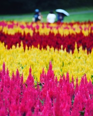 秋の色花 (*^◯^*)